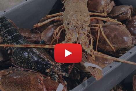 Vidéo de présentation de Béganton, mareyeur spécialiste des crustacés en Bretagne
