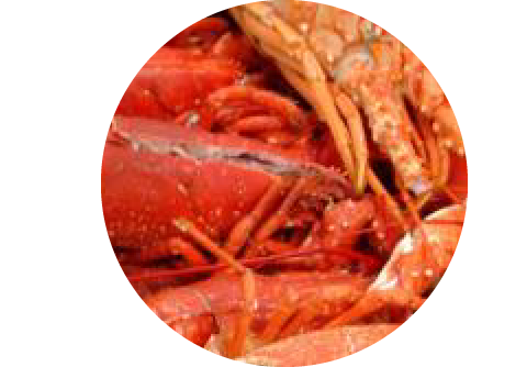 1/2 homard européen